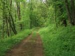 M-chemin-forestier-visorando-2420