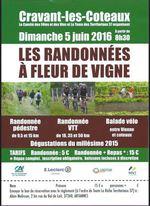 05-06-2016_rando_a_fleur_de_vigne_cravant_les_coteaux